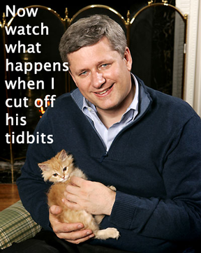 stephen-harper-kitten1