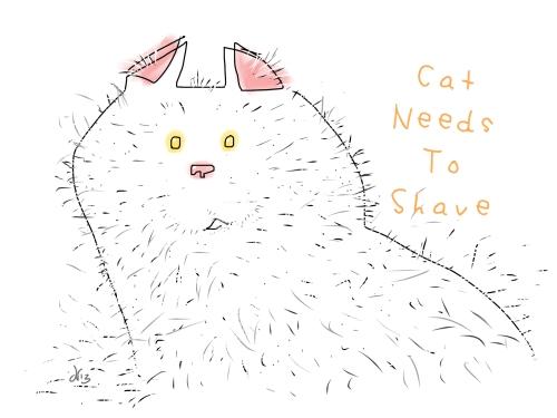 an unshaven cat