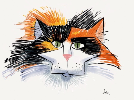 Calico cat face
