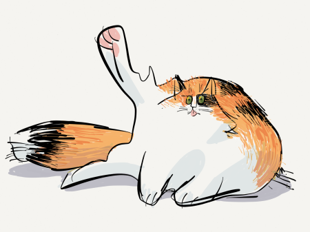Goofy calico cat with foot in the air